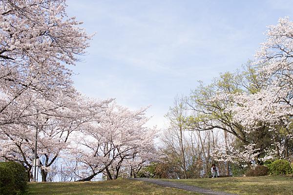 桜と読む人