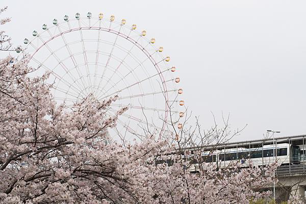 桜と観覧車とリニモ