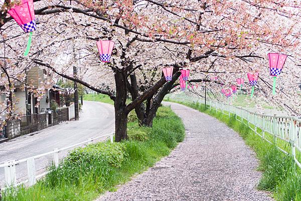香流川緑道と花絨毯