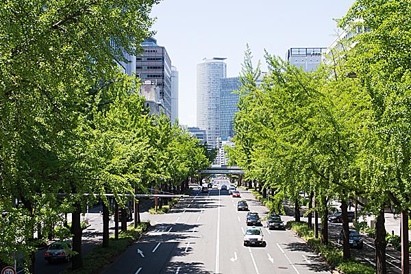 日銀前歩道橋から見る桜通のイチョウ並木の青葉