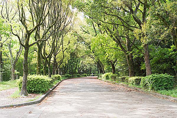 平和公園南エリアの新緑