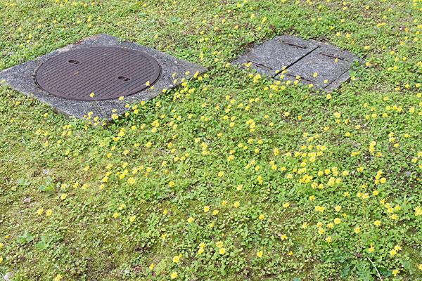 黄色い花がたくさん