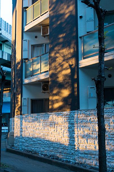 建物に落ちる冬の木漏れ日