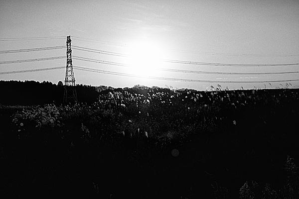 ススキの光と影の風景