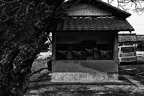 町の小さなお社と桜の古木