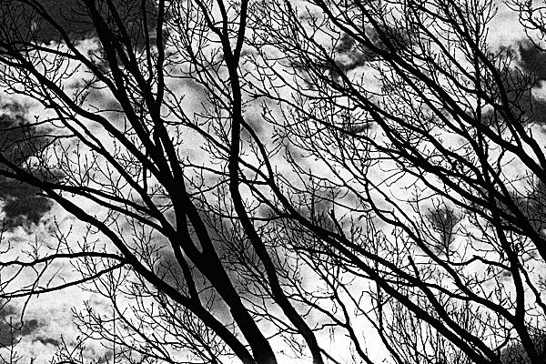 冬枯れの木の枝