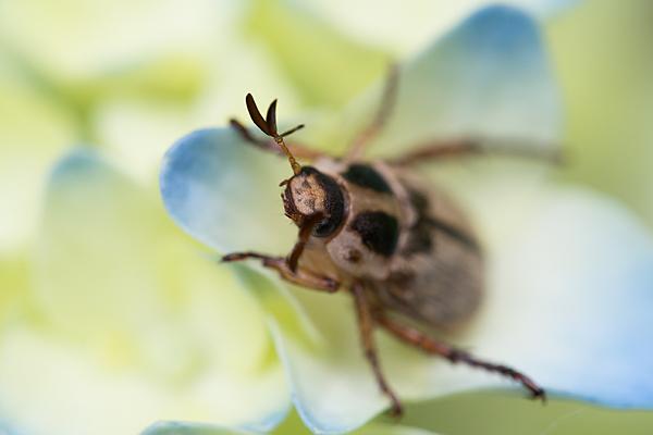 何かの甲虫
