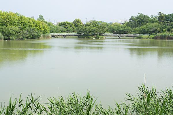 杁ヶ池の風景