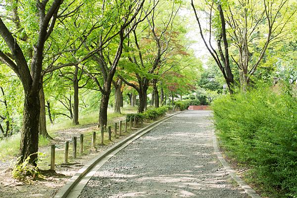 桜並木の散策路