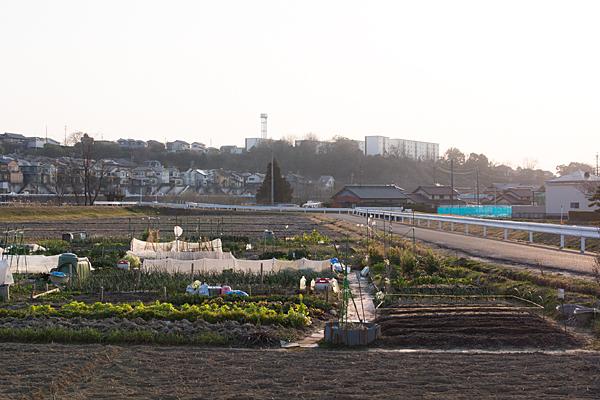 町の畑風景