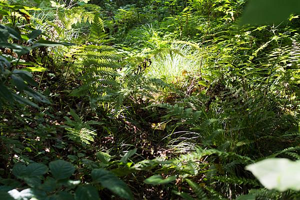 草ぼうぼうの踏み跡