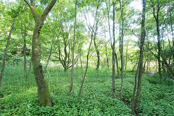 猪高緑地緑の風景