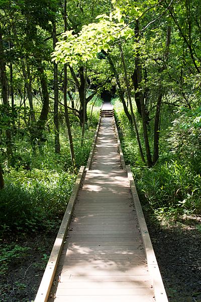 木道と緑の風景