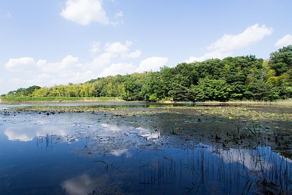 塚ノ杁池と初夏の空