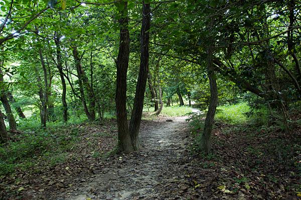 散策路の林道
