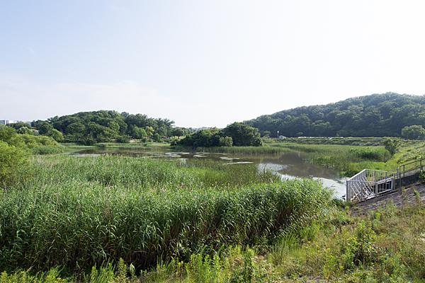 大根池全景