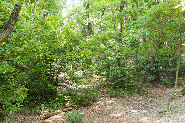 雑木林エリア