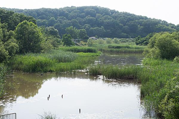 大根池を東から見る