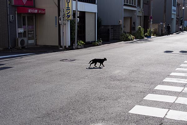 道を渡る猫
