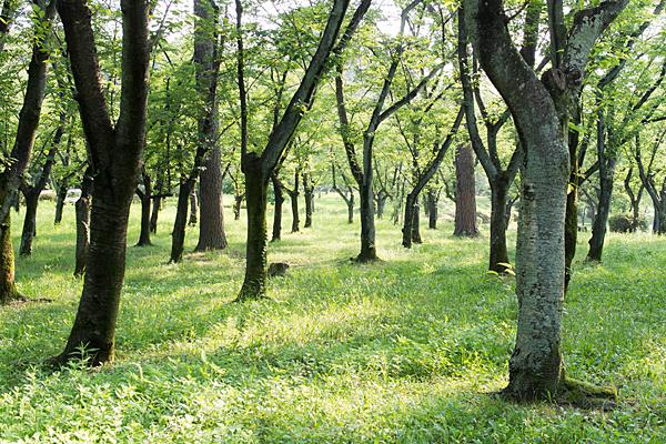 平和公園桜の園の7月