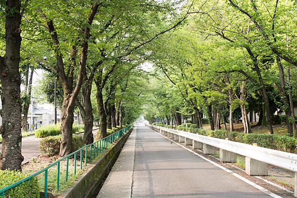 桜並木の7月