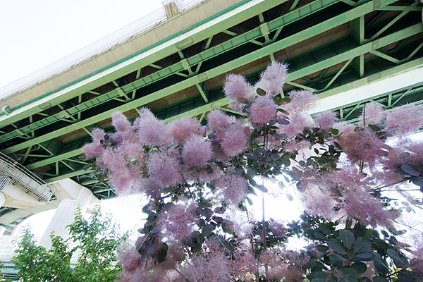 花と高速道路の高架