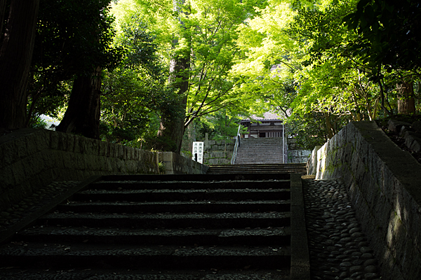 雲興寺参道の光と影の風景