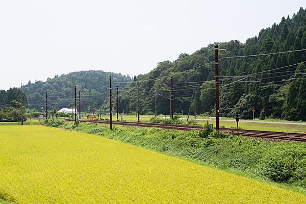 北陸本線と田んぼ風景