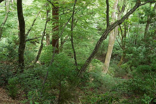 ブナなどの原生林