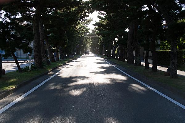 舞阪宿松並木