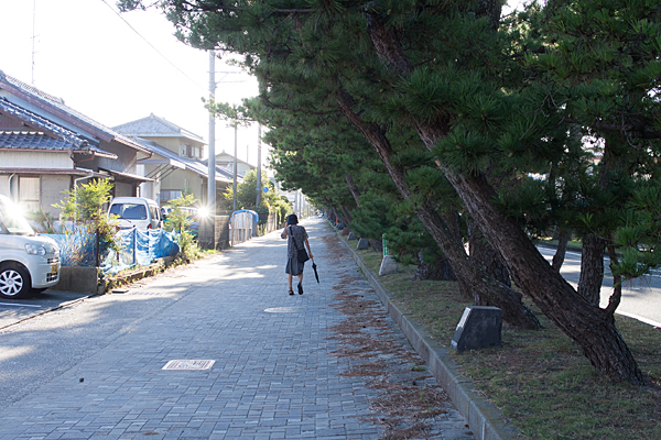 松並木のある風景