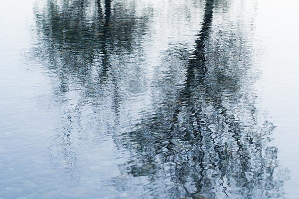 水面に映る木の影