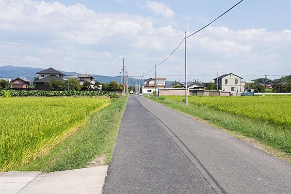 夏の田んぼ風景
