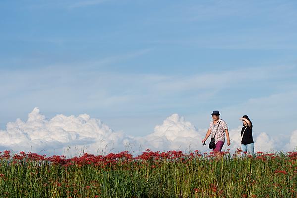 土手のヒガンバナと入道雲と夫妻