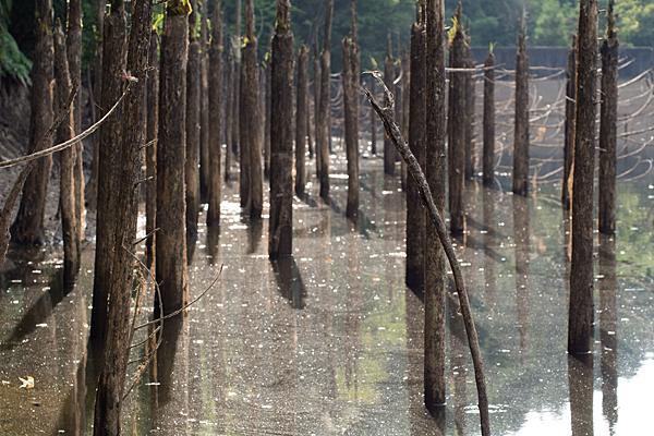 水没枯れ木