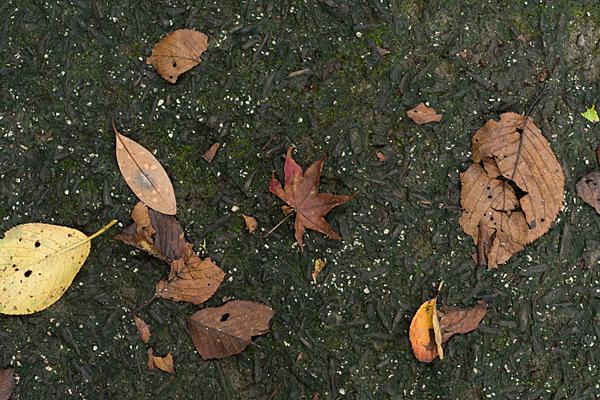 地面の落ち葉