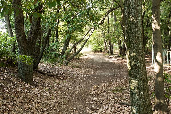 雑木林の散策路