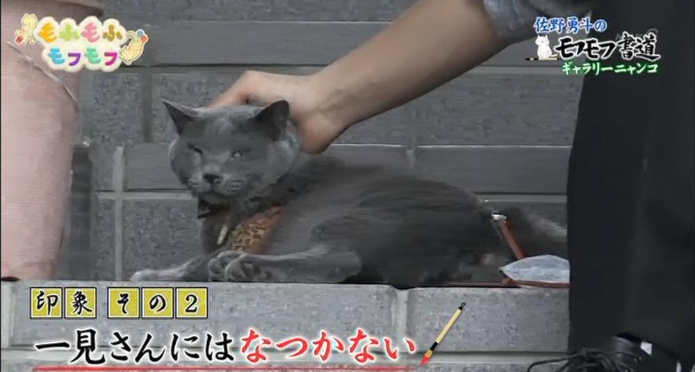 NHK もふもふモフモフ 猫 大田区 工場長 ダミアン パンタレイ panta イワキ精工