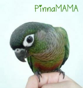 PinnaMAMA