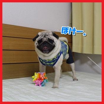 IMG_4095-1.jpg