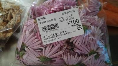 やくらい菊