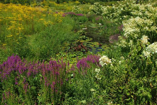 星ヶ丘公園のオミナエシとミソハギとノリウツギ