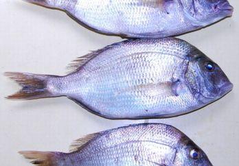 安くて新鮮な魚が食べたい