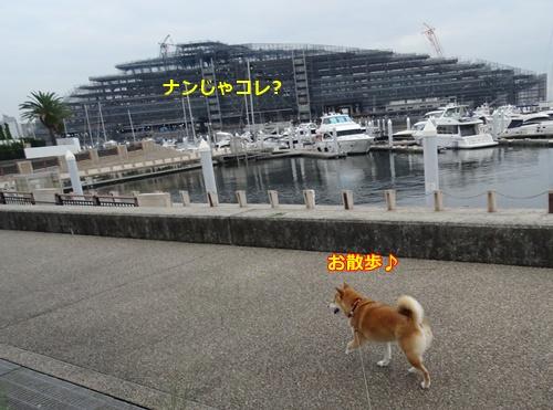 2快調にお散歩