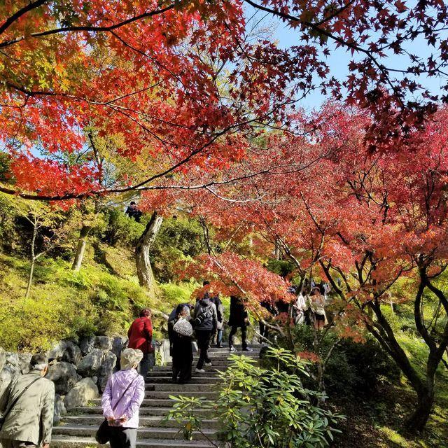 東福寺11