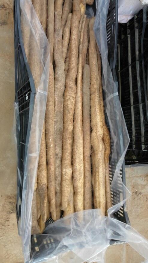KIMG0013自然薯の収穫13