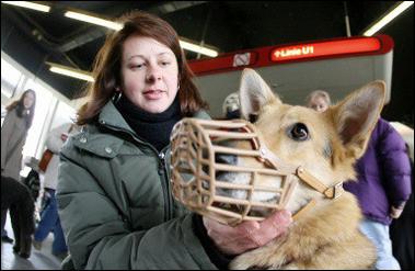 ウィーンで、「犬免許証」が交付?