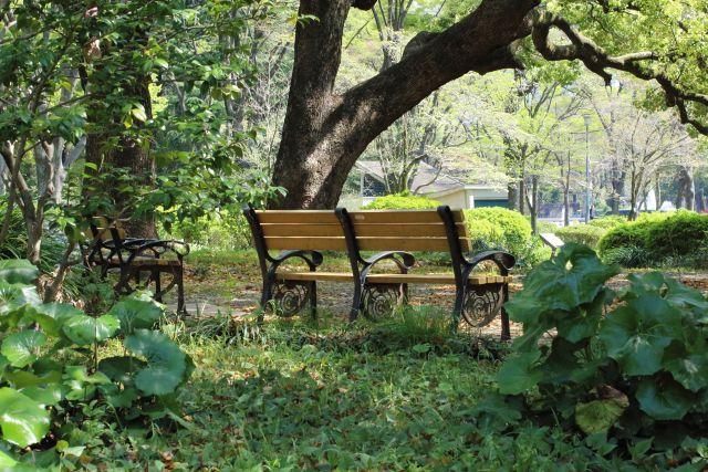 木陰の ベンチ