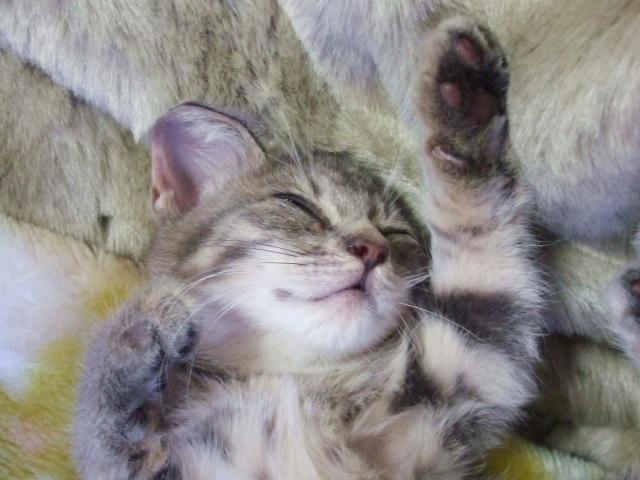 睡眠中には、コップ1杯分の汗をかく?