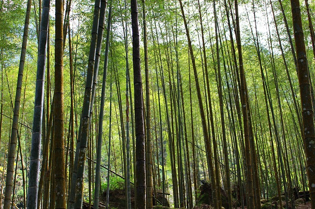 「不甲斐無い(ふがいない)」は、竹取物語から生まれた言葉だった?